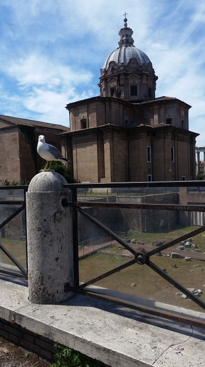 Seagull at the Forum